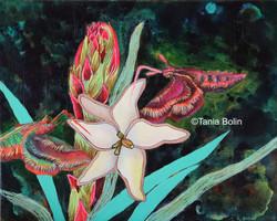 succulent Yucca