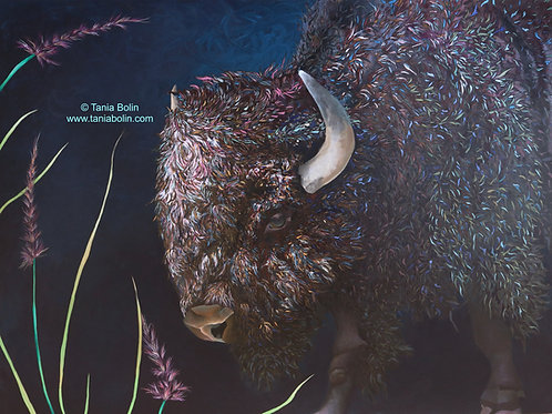 """Limited Edition Print of """"Burly Bison"""" - Matted"""