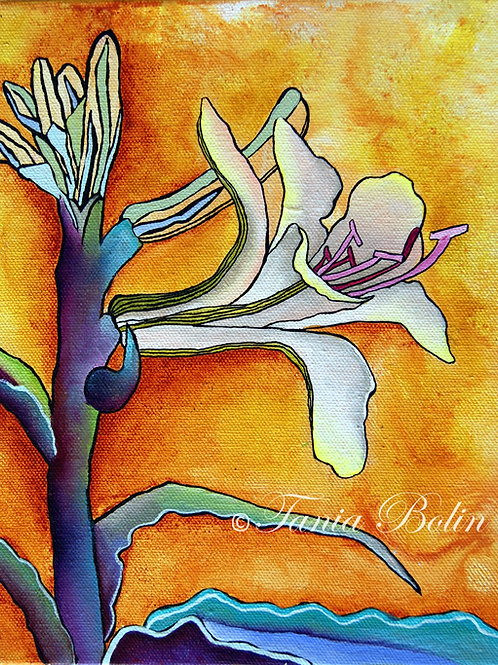 Limited Edition Print 'Waiting for my desert lily' - Matted