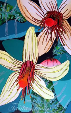 Flor de Araña