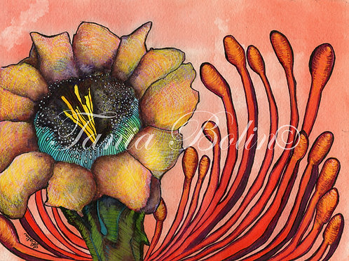 Limited Edition Print 'Queen Arizona I' - Matted