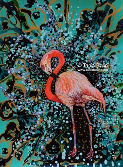 Flamingo Flamboyant