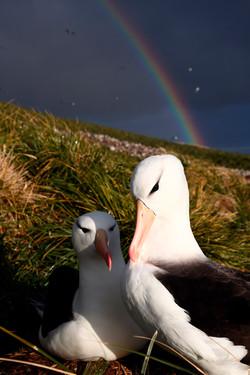 Albatross & Rainbow