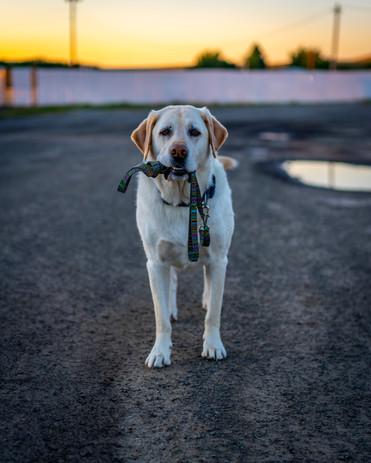 Oscar On-Leash-01863.jpg