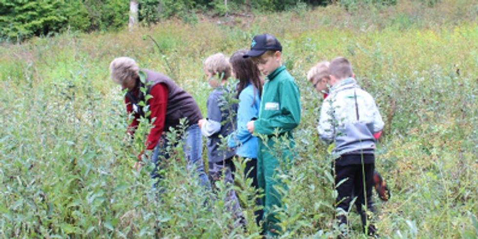 Kräuter- und Pflanzenkunde