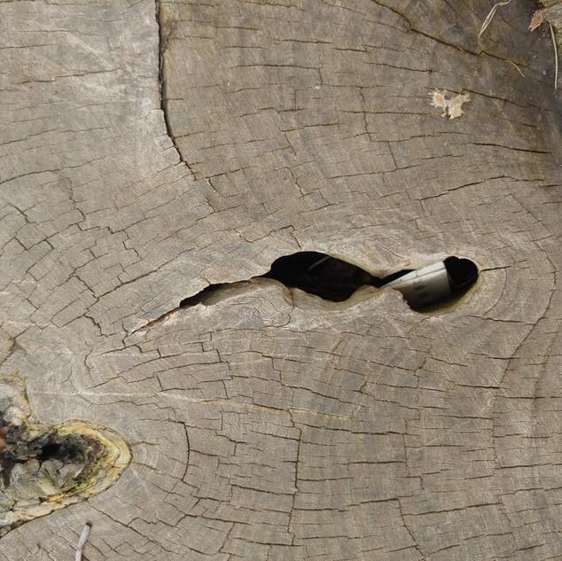 Note in tree detail
