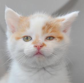 kd cat (9).jpg