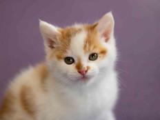 cat web (37).jpg