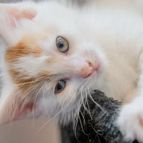 kd cat (7).jpg