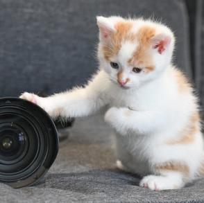kd cat (2).jpg