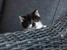 cat web (9).jpg