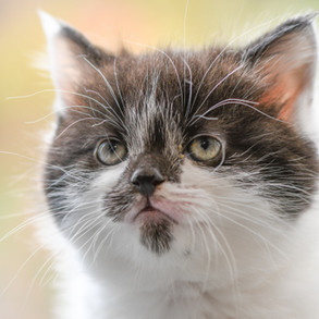 kd cat (10).jpg