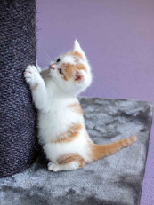 cat web (14).jpg