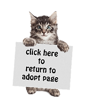 small-cat-return-sign.png