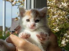 cat web (11).jpg