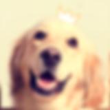 home_perros_mimados1.png