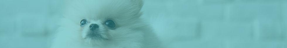 banner categorias perros.jpg