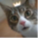 home_gatos_consentidos2.png
