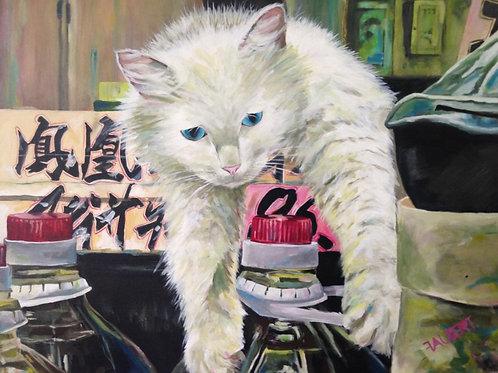 Un chat à Macau