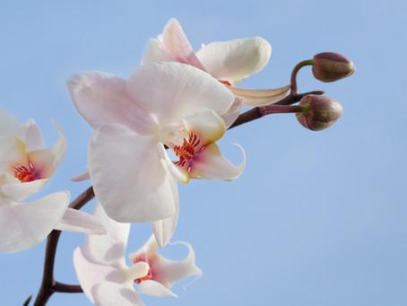 El mágico mundo de las orquídeas