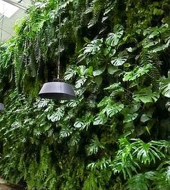 Ecosistema Vertical Ecoyaab Jardin Vertical Muro Verde Fachada Vegetal Pared con Plantas Vertical Ecoyaab