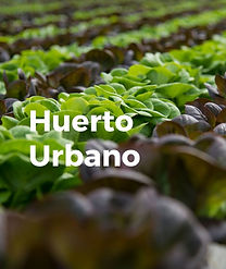 Huerto Urbano.jpg