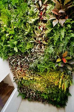 Muro Verde, Ecosistema Vertical Ecoyaab Jardin Vertical Muro Verde Fachada Vegetal Pared con Plantas Vertical Ecoyaab