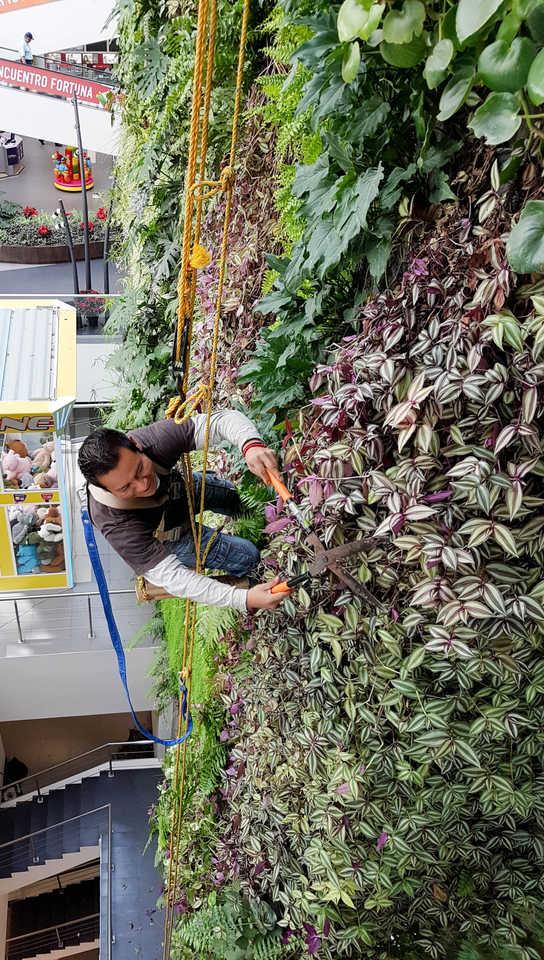 Mantenimiento Jardin Vertical
