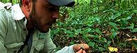 Jardines Verticales, Muros Verdes, Fachada Vegetal, México, Distrito Federal, Ecoyaab