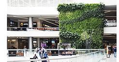 Jardines Verticales, Muros Verdes, Fachada Vegetal, México, Distrito Federal, Ecoyaab, Jardín Vertical, Green Wall, Muro Vivo, Azotea Verde, Techo Verde,