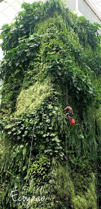 Jardin Vertical Ecosistema Vertical Ecoyaab Muro Verde Fachada Vegetal Pared con Plantas Vertical Ecoyaab Ecosistema Vertical Ecoyaab Jardin Vertical Muro Verde Fachada Vegetal Pared con Plantas Vertical Ecoyaab, Jardines Verticales, Muros Verdes, Fachada Vegetal, México, Distrito Federal, Ecoyaab, Jardín Vertical, Green Wall, Muro Vivo,Azotea Verde, Techo Verde,