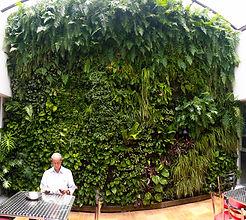 Ecosistema Vertical Ecoyaab Jardin Vertical Muro Verde Fachada Vegetal Pared con Plantas Vertical Ecoyaab, Jardines Verticales, Muros Verdes, Fachada Vegetal, México, Distrito Federal, Ecoyaab, Jardín Vertical, Green Wall, Muro Vivo,Azotea Verde, Techo Verde,