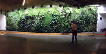Muro Verde Sotano