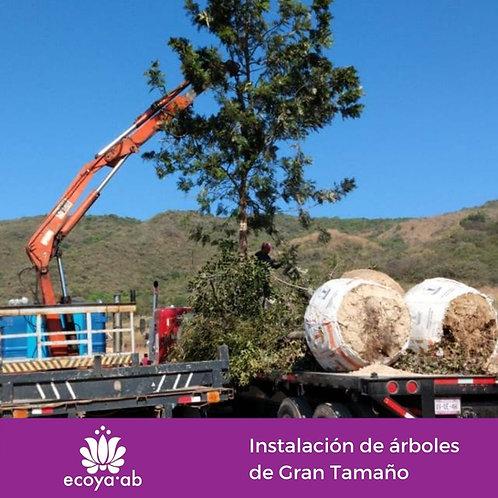 Instalación de árboles de gran tamaño