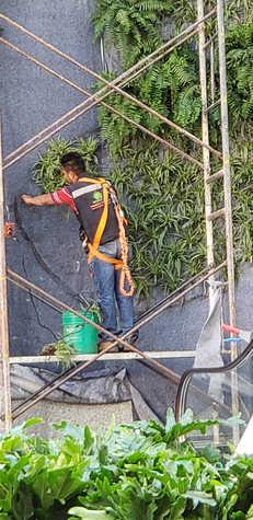Instalación Muro Verde