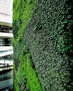 Ecosistema Vertical Ecoyaab Jardin Vertical Muro Verde Fachada Vegetal Pared con Plantas Vertical Ecoyaab, Jardines Verticales, Muros Verdes, Fachada Vegetal, México, Distrito Federal, Ecoyaab, Jardín Vertical, Green Wall, Muro Vivo,Azotea Verde, Techo Verde