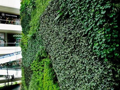 Curso Profesional online de Jardines Verticales impartido por Biólogo Ignacio Solano