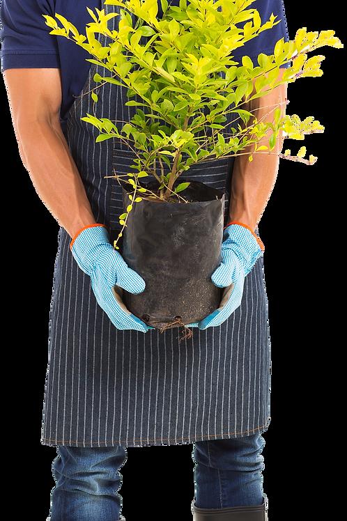 Servicio de Instalación árboles (por pz)