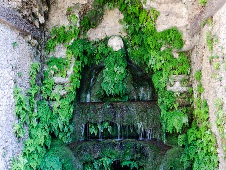 La Historia de los Jardines Verticales