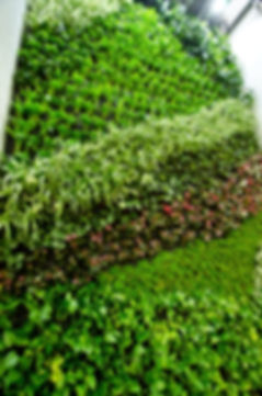 Jardines verticales, Muros verdes, Jardín Vertical, Muro Verde, Muro Vivo, Green Wall, Living Wall