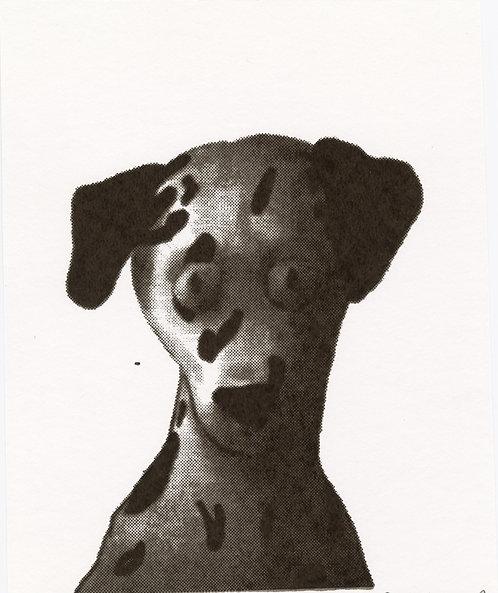市川 詩織 / 本能を思い出せない犬Ⅰ
