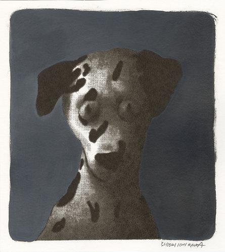 市川 詩織 / 本能を思い出せない犬