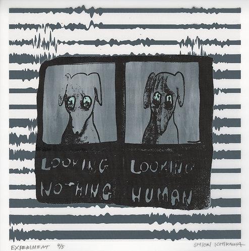 市川 詩織 / 実験 -人間を見るときの表情を実験された犬-