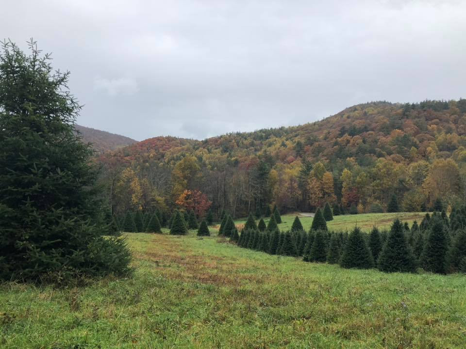 Moss Tree Farm Fall 2018