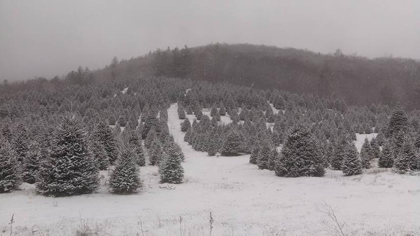 Snowy Secondary Field