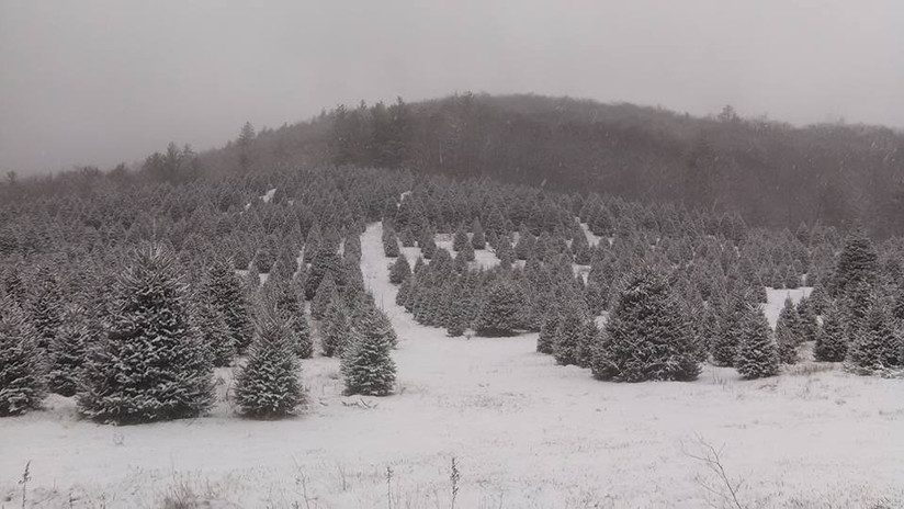 Snowy Moss Tree Farm