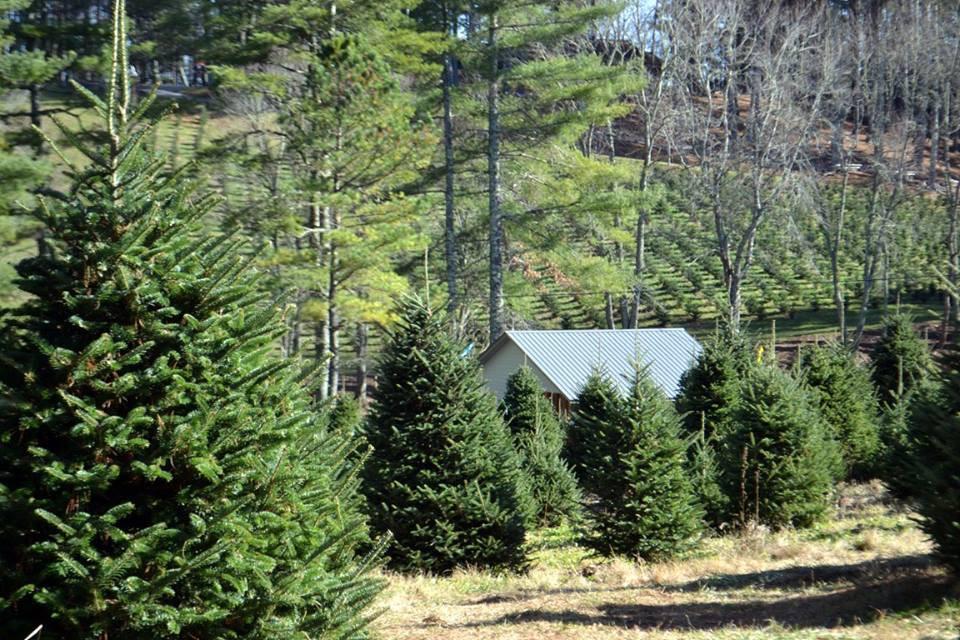 Moss Tree Farm 2015