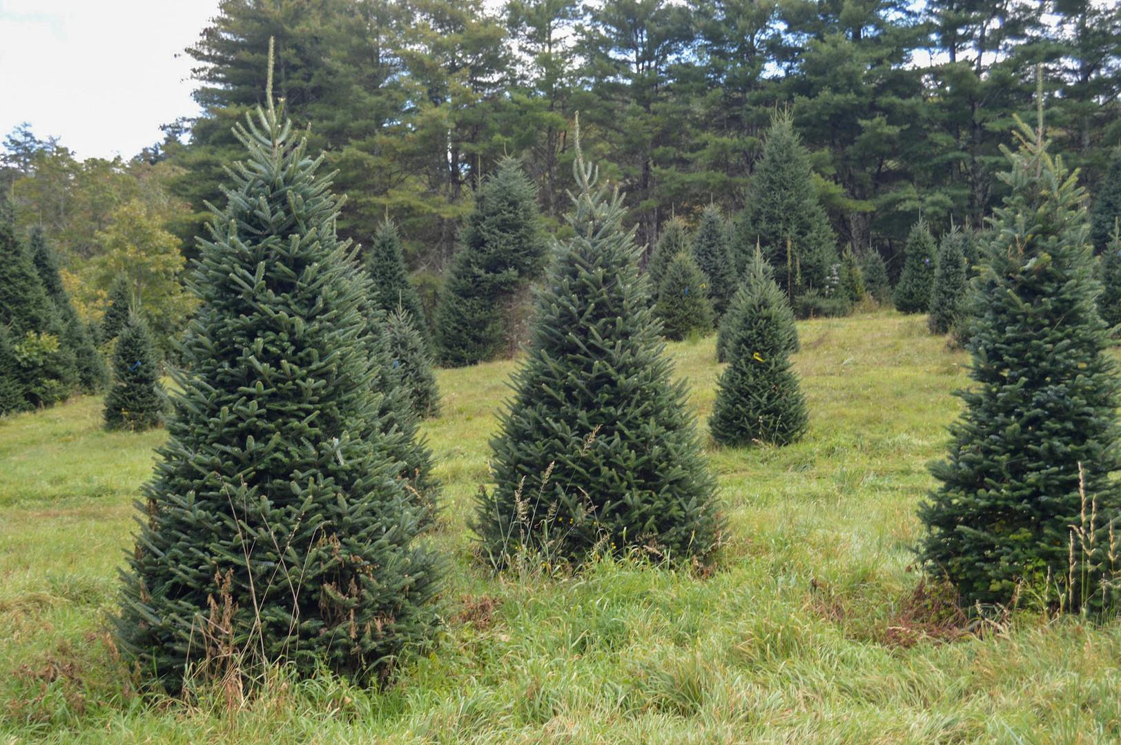 Moss Tree Farm 2020