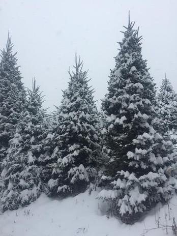 Moss Tree Farm Snowy