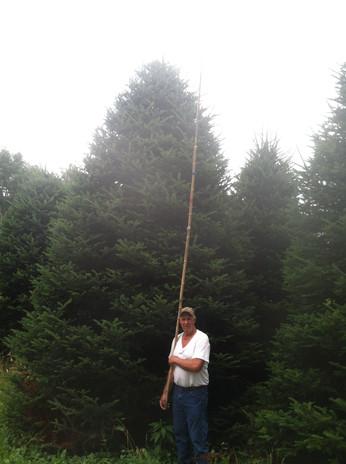 Measuring Christmas Trees